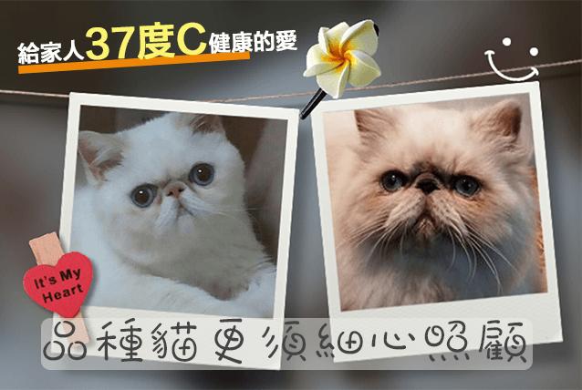 寵物2016-1-2