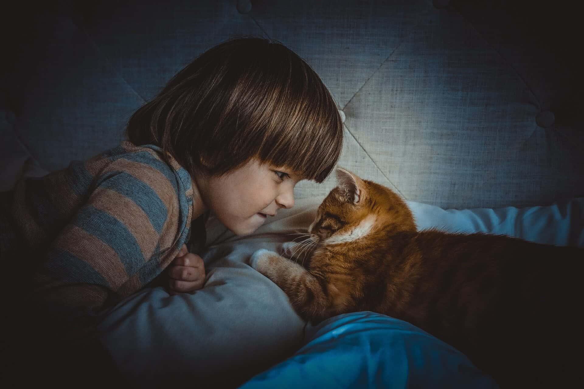 cat-1045180_1920-2