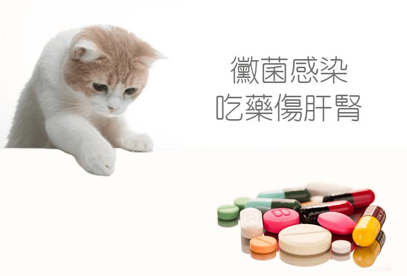 pet skin 201809
